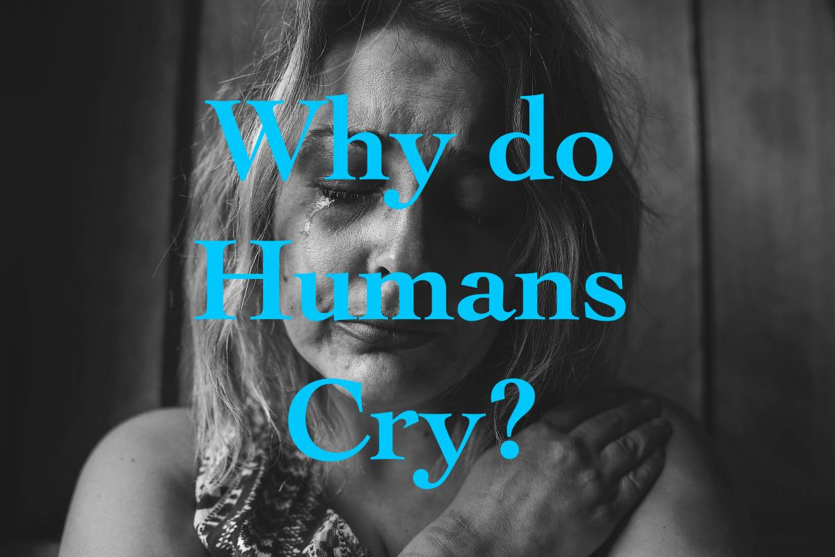 This article explores the science behind why humans cry.