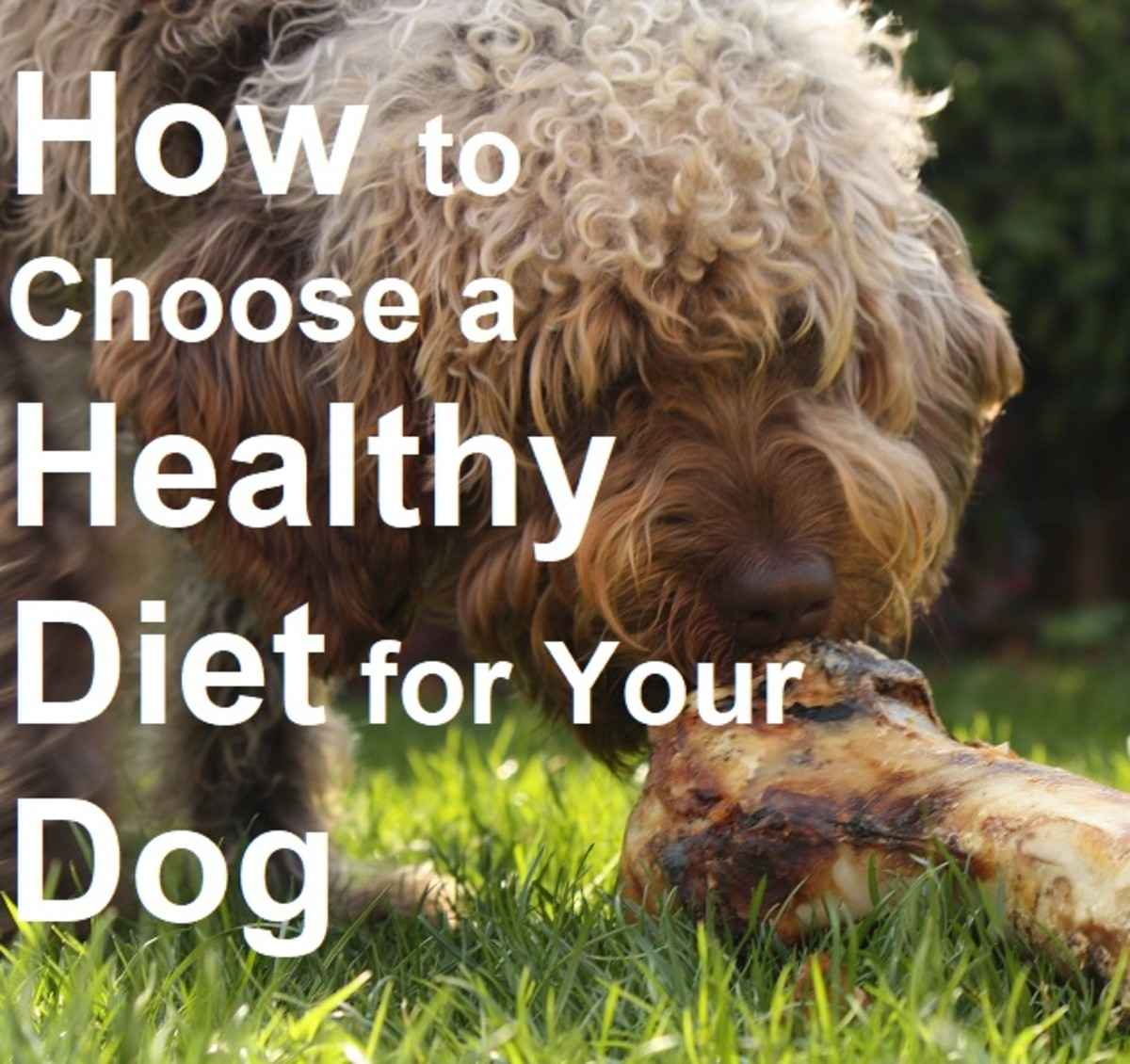 Choosing the right diet for your dog's age, breed, and lifestyle is important for his health and happiness.