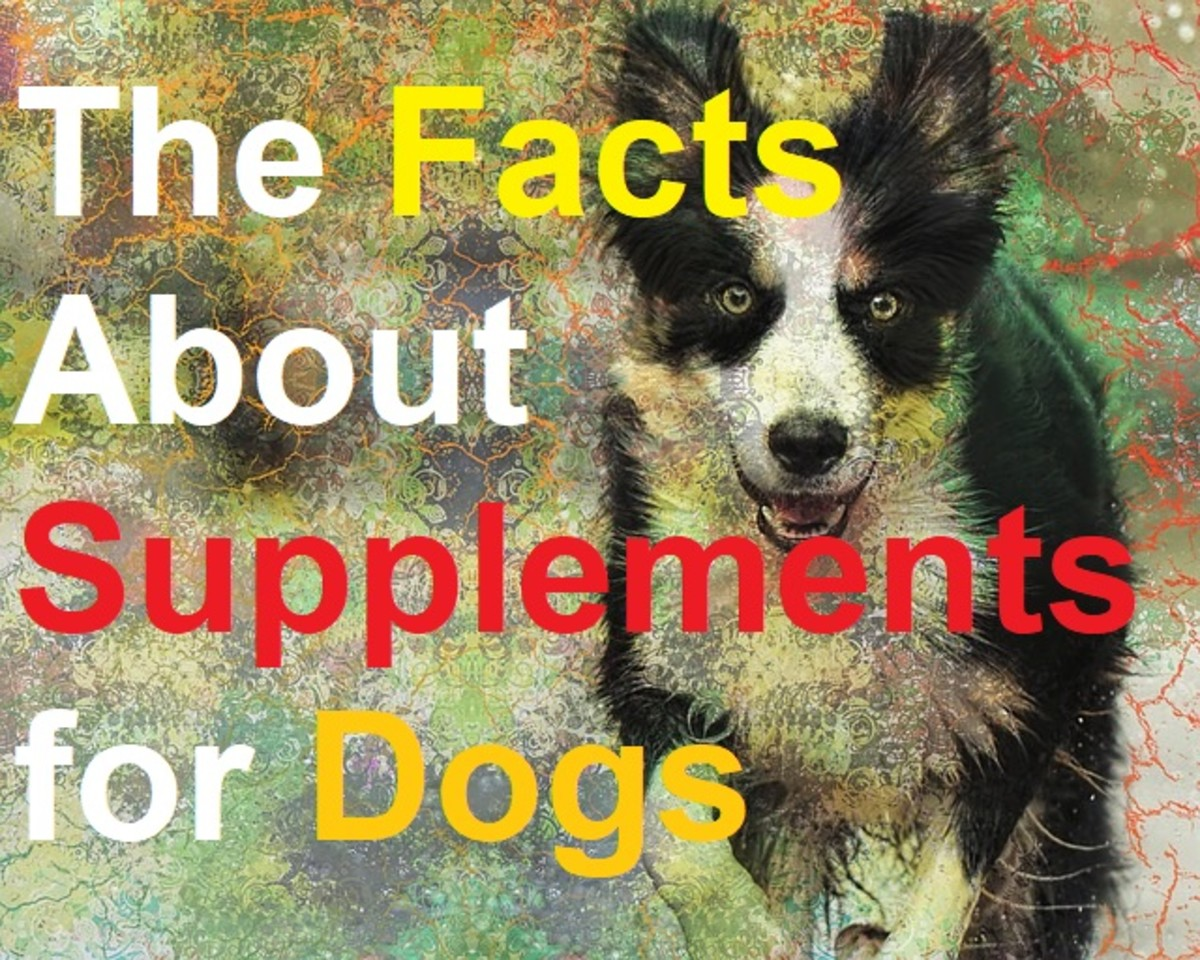 The Facts About Vitamin and Mineral Supplements for Dogs