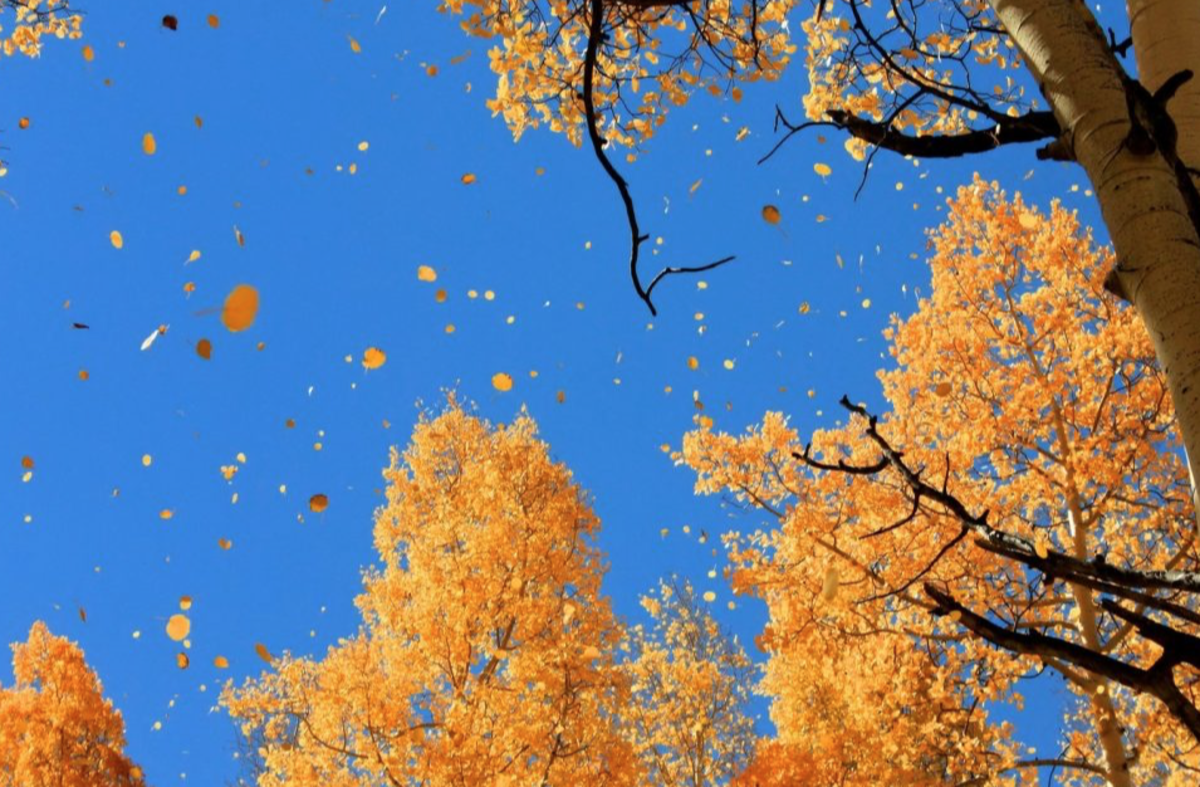 Just Before We Die: Lessons of the Leaves