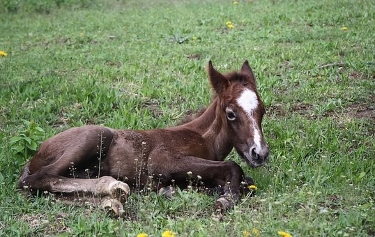 New foal waiting for an astronomical name.