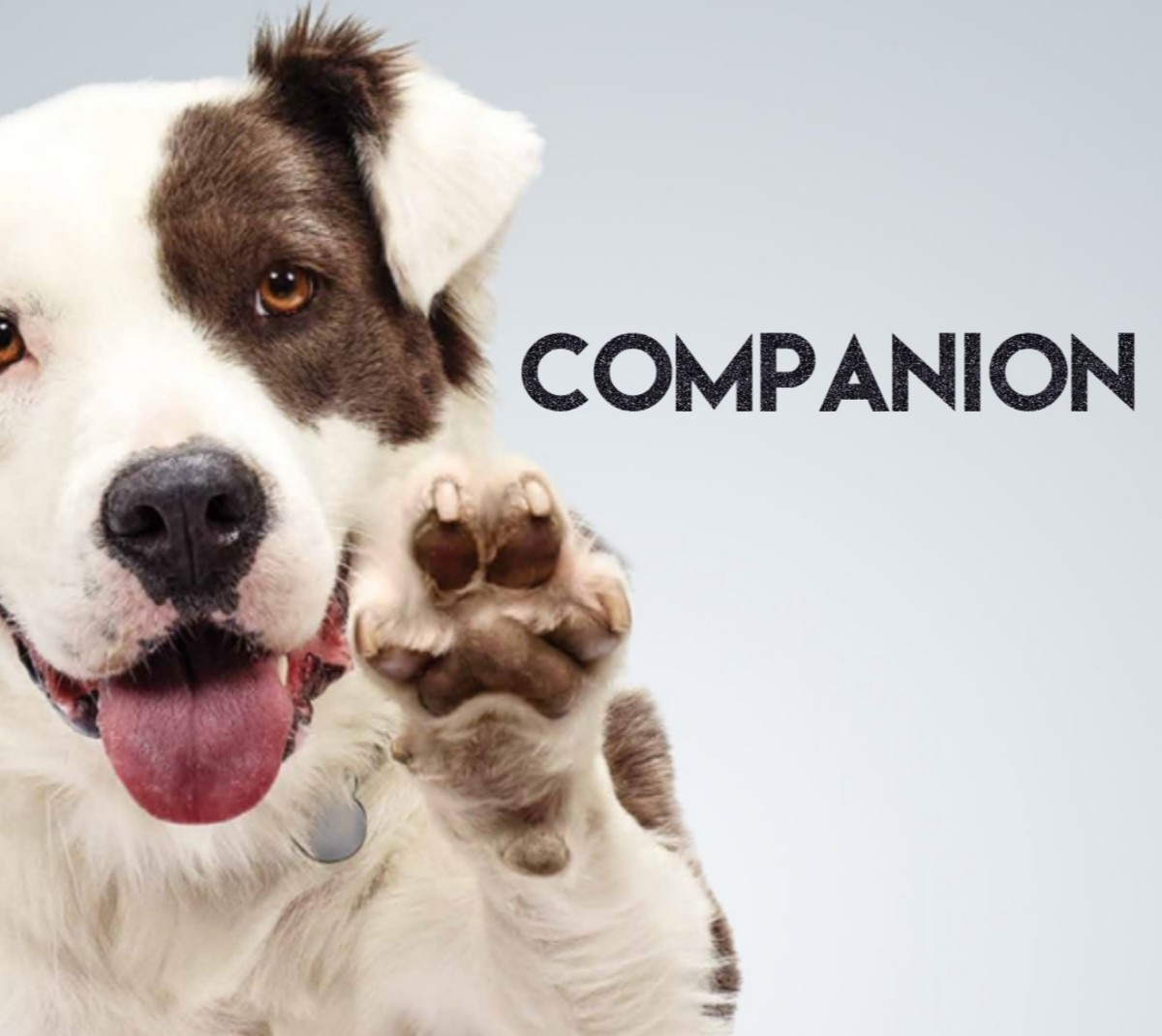 Companion (A Narrative Poem)