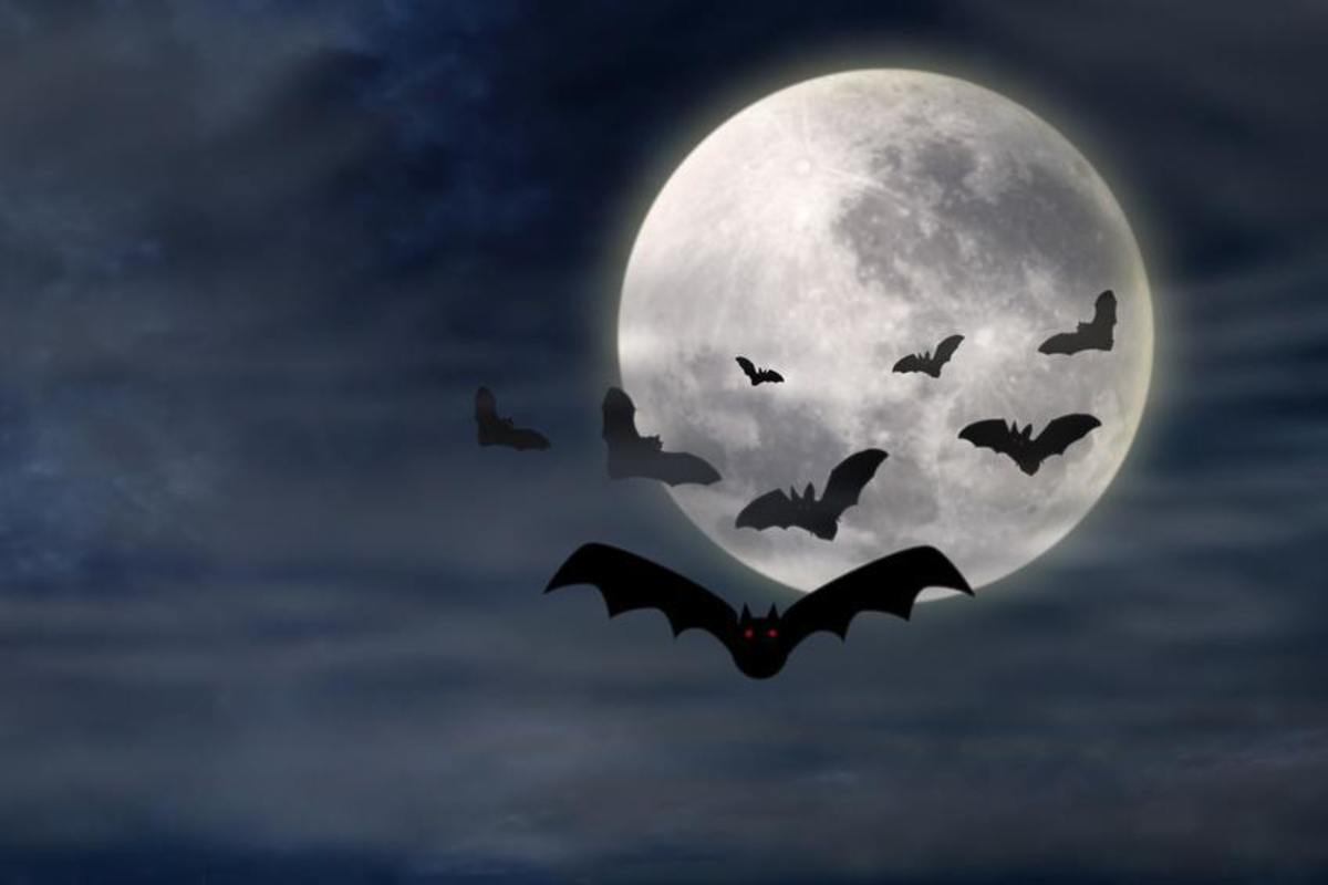 Frightful Night