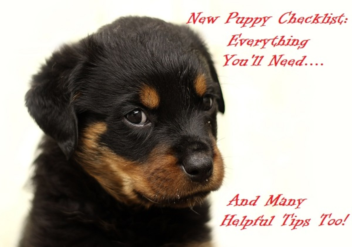 New Puppy Checklist: Supplies You'll Need When Getting a Puppy