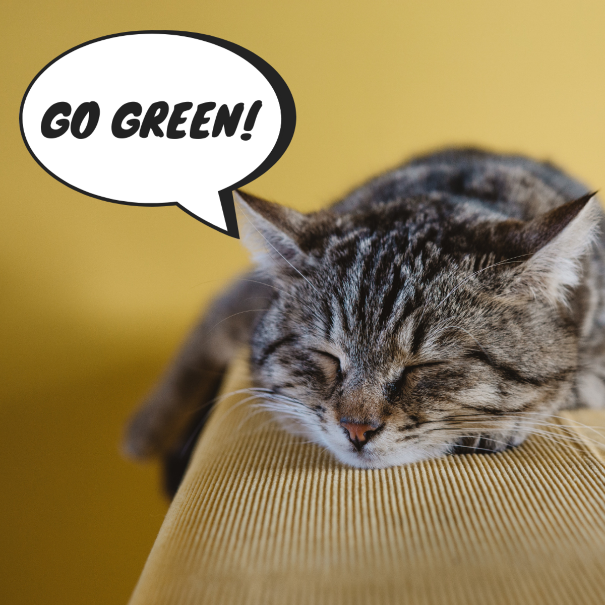 Go green with biodegradable cat litter!