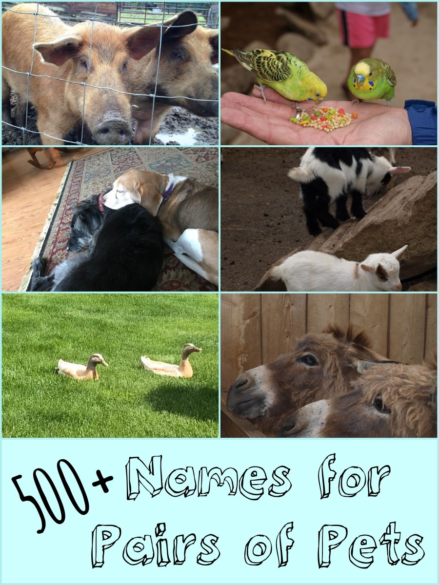 If you have a new pair of pets and they don't have names yet, then you need this list.  There are over 500 names to choose from!