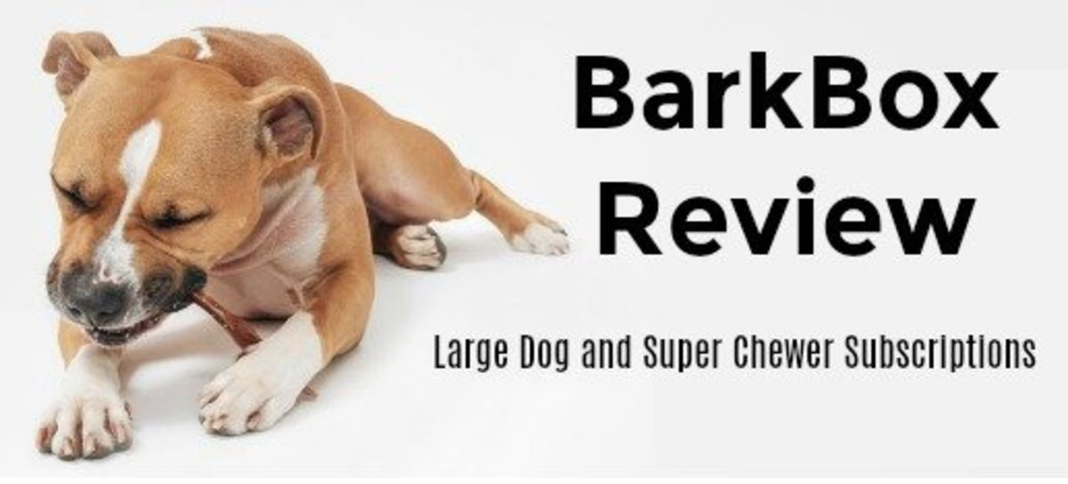 BarkBox subscription review for Large Dog Box and Super Chewer.
