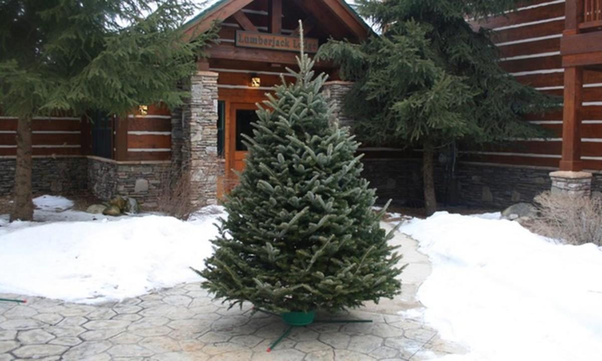 The Saddest Tree at Christmas Time