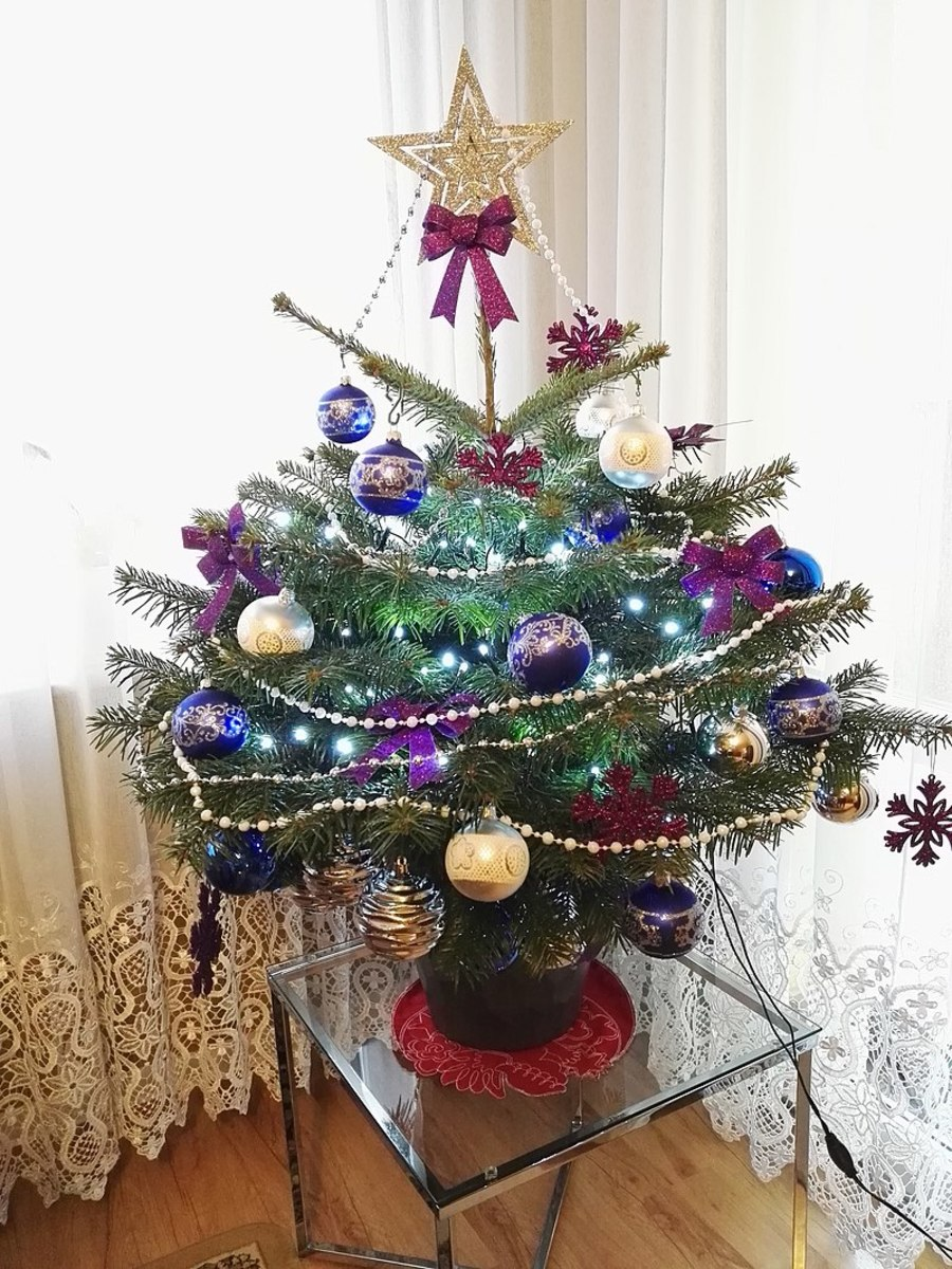 A small tabletop living Chritmas tree.