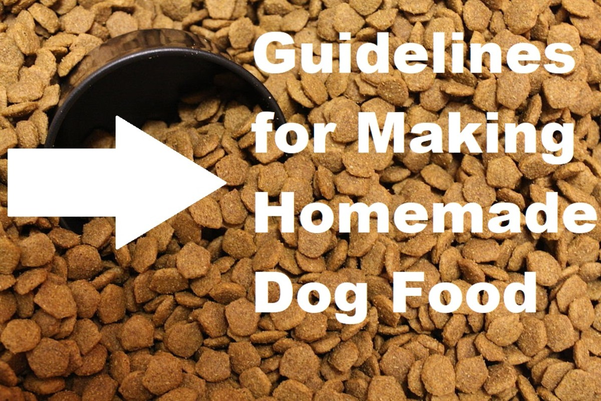 5 Important Guidelines for Preparing Homemade Dog Food