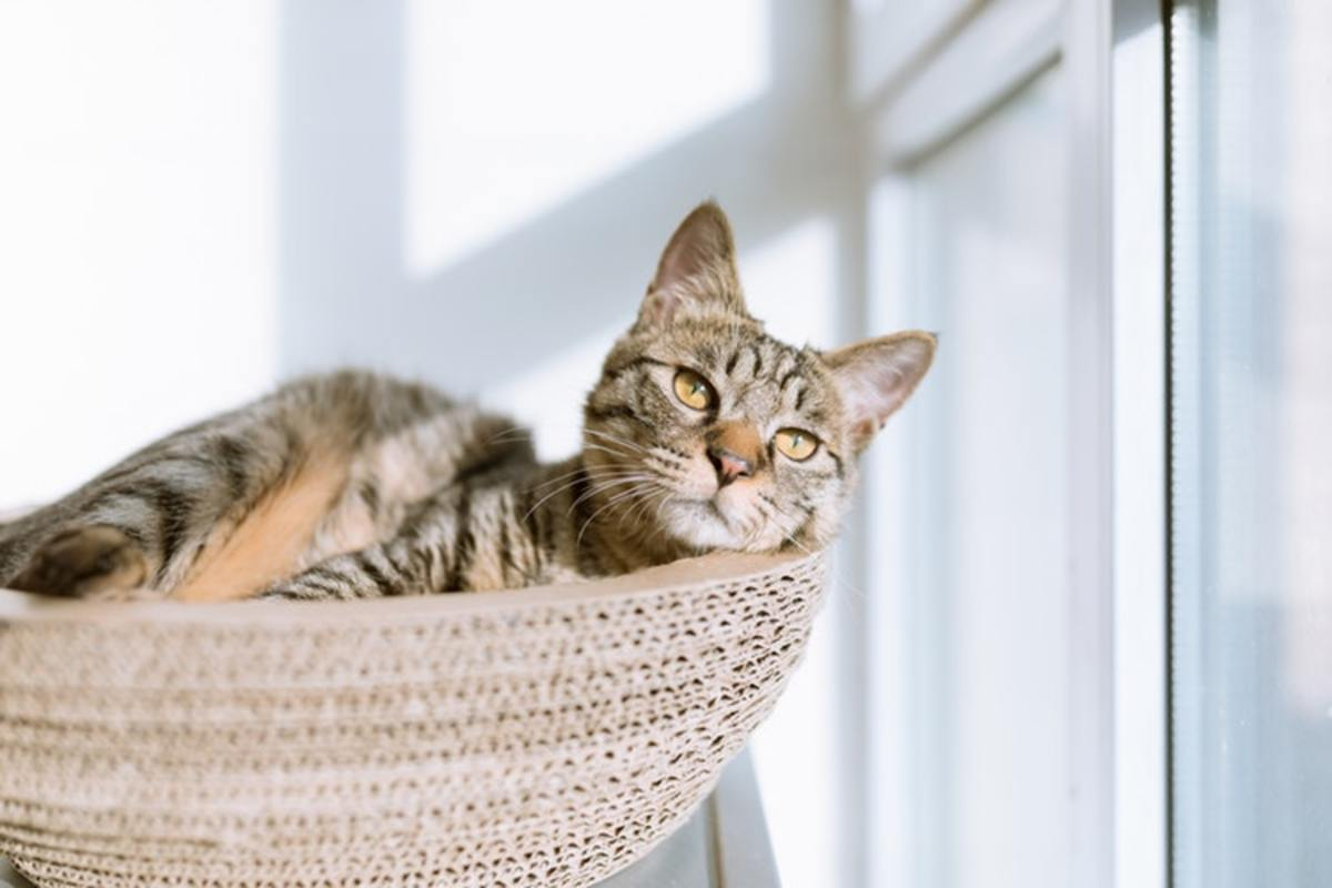 How to Keep Your Cat Happy Inside the Home