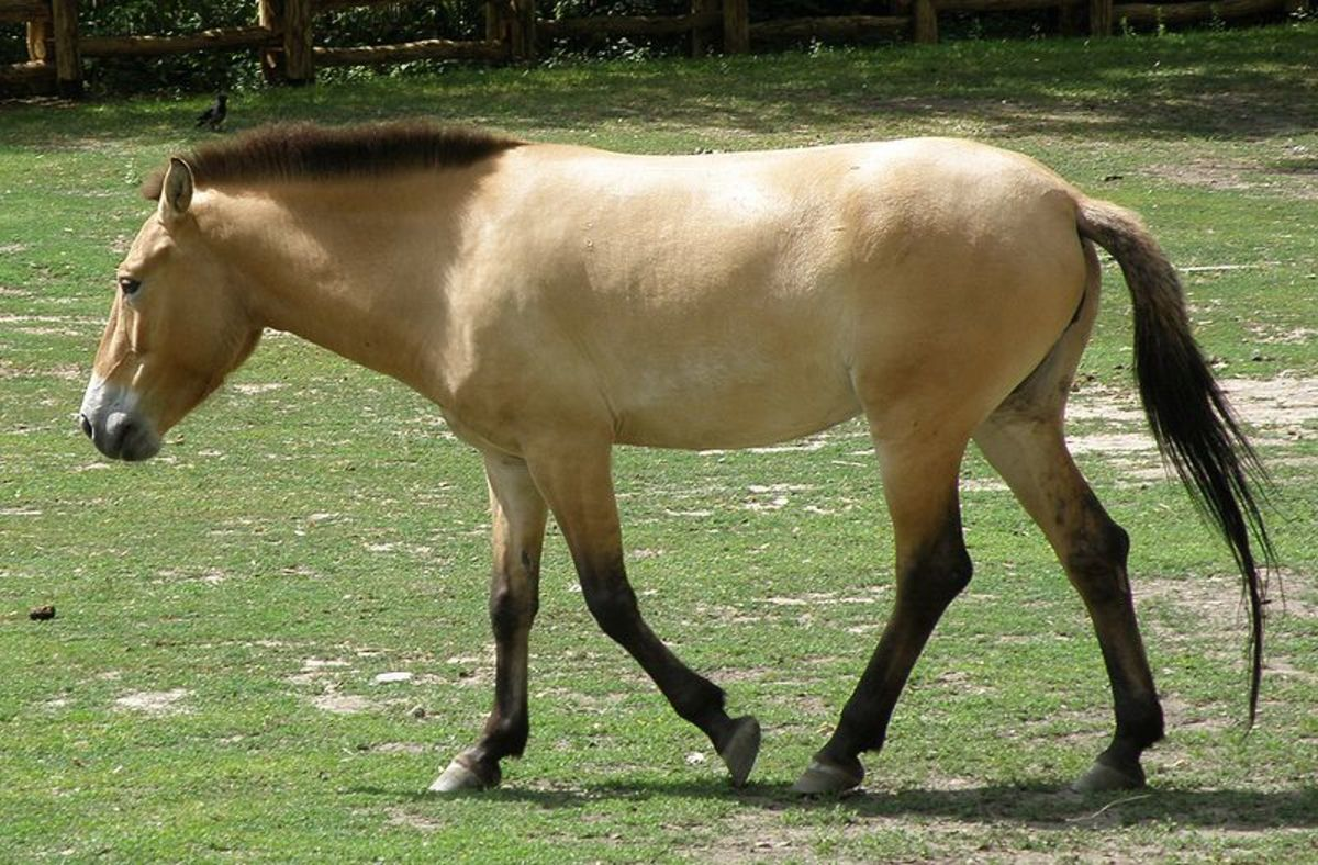 An Intro to Horse Coat Color Genetics