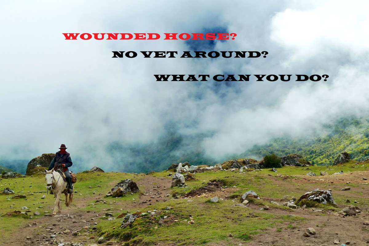 How to Treat a Wounded Horse When No Vet Is Available