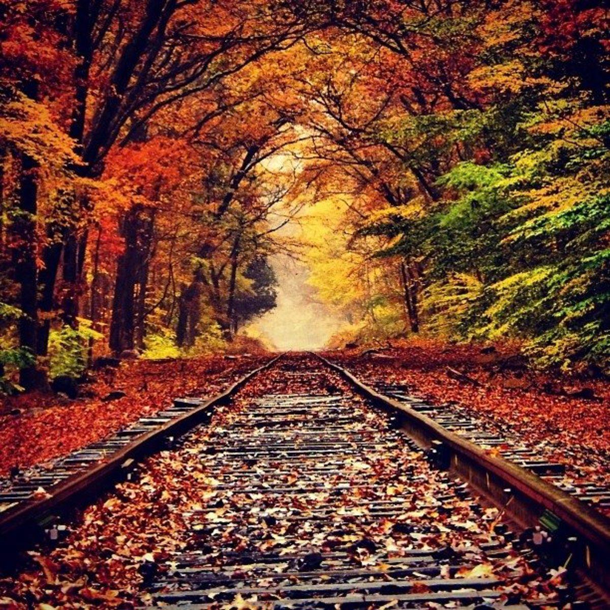 Autumn Breeze, Falling Leaves