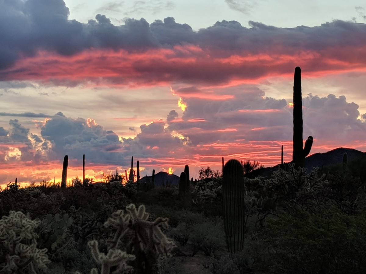 Even before it emerged above the horizon the morning sun was providing a colorful backdrop against the waiting Saguaro Cacti