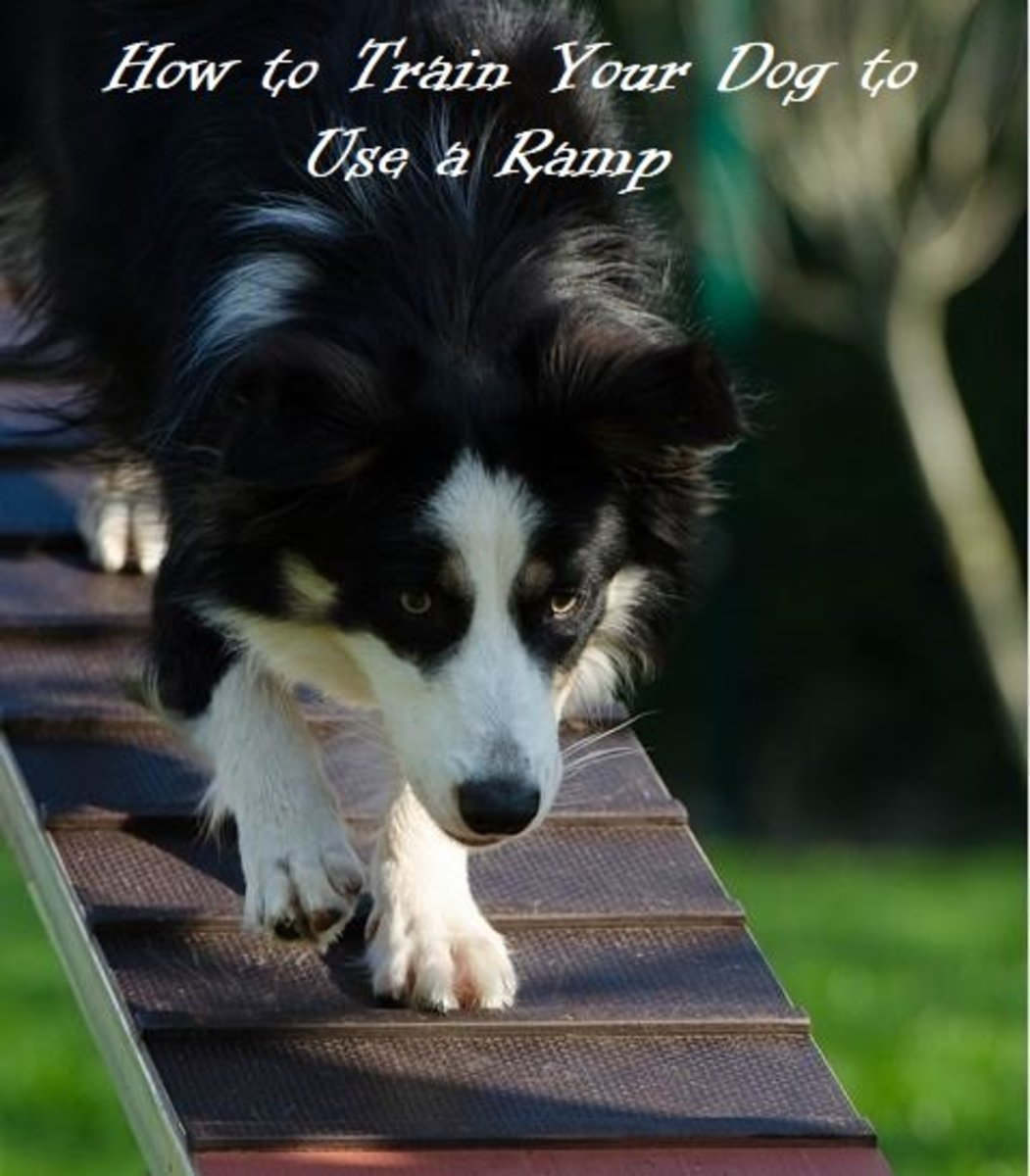 Training a dog to use a ramp to go up a truck or car is a similar process of training a dog to use a ramp in the canine sport of agility.
