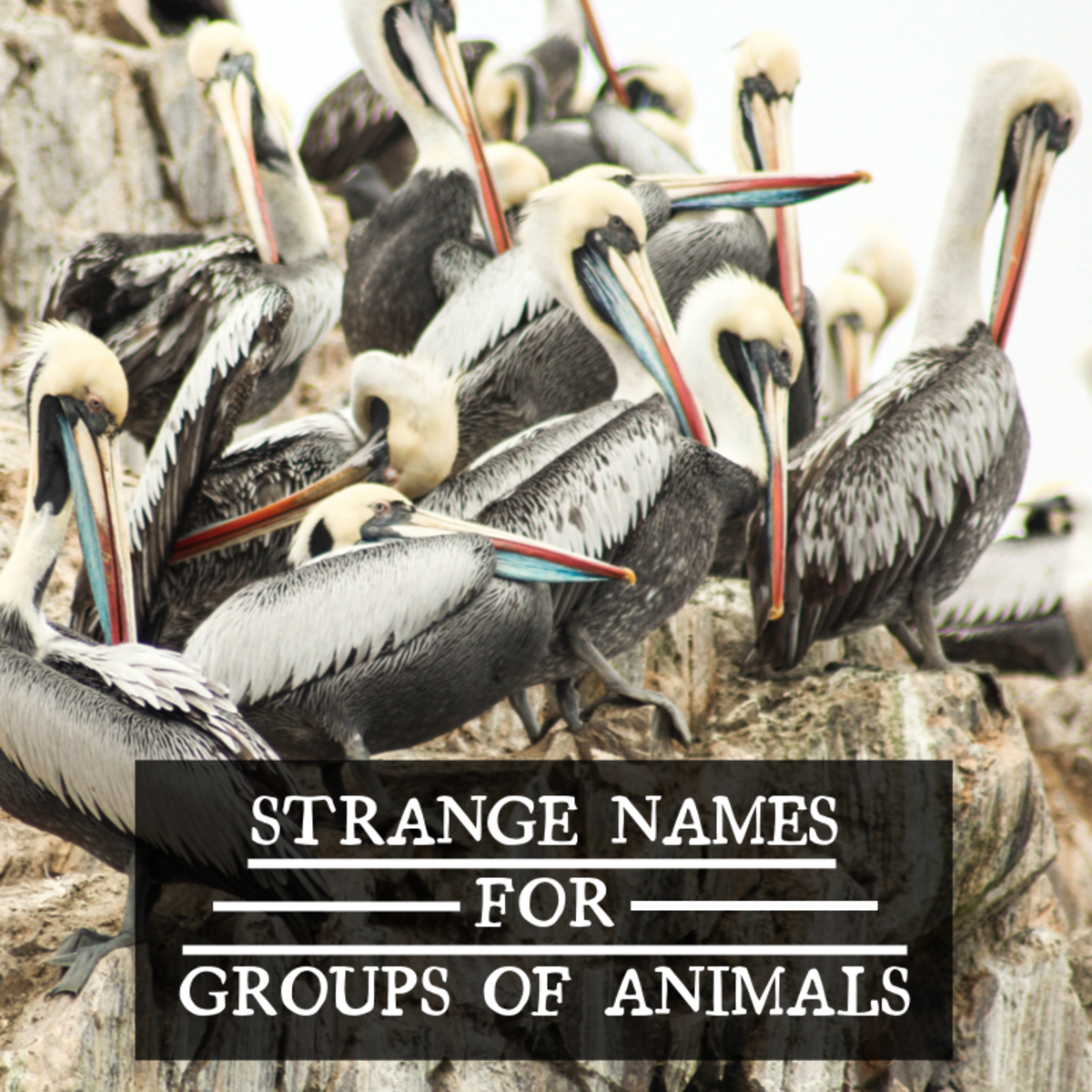 While some animals' collective names have become quite well-known over the years, most are still fairly obscure, and some are just downright strange.