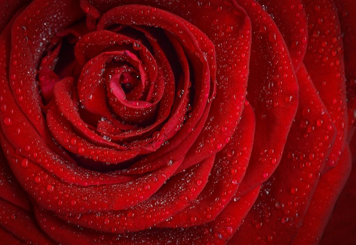 Blush, a Love Poem