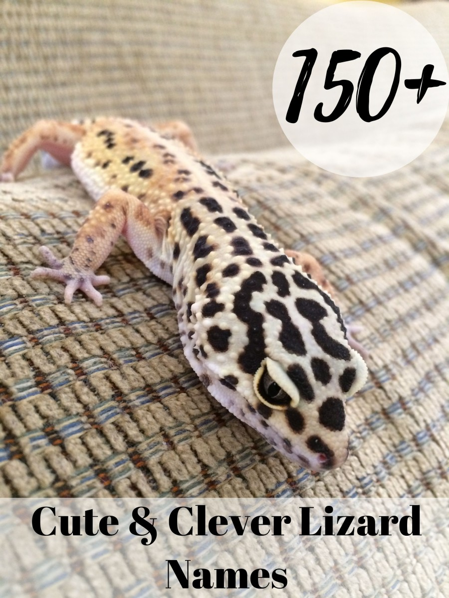 150+ Cute and Clever Names for Your Pet Lizard