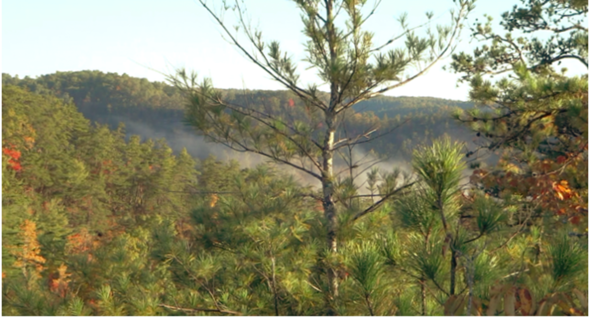 Red River Gorge: Hanson's Point in Autumn