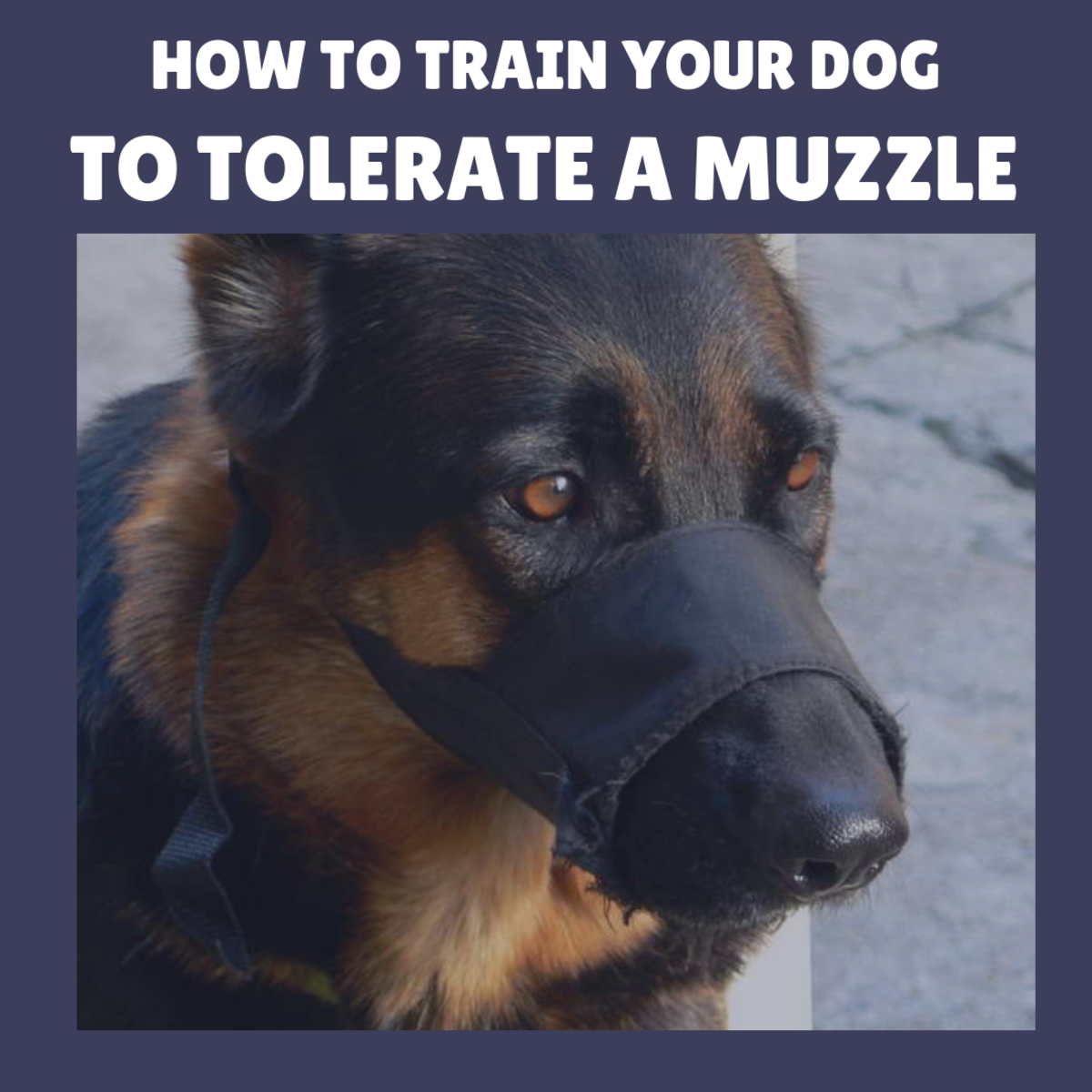 Wearing a muzzle doesn't have to be dreaded—train your dog by using positive reinforcement.