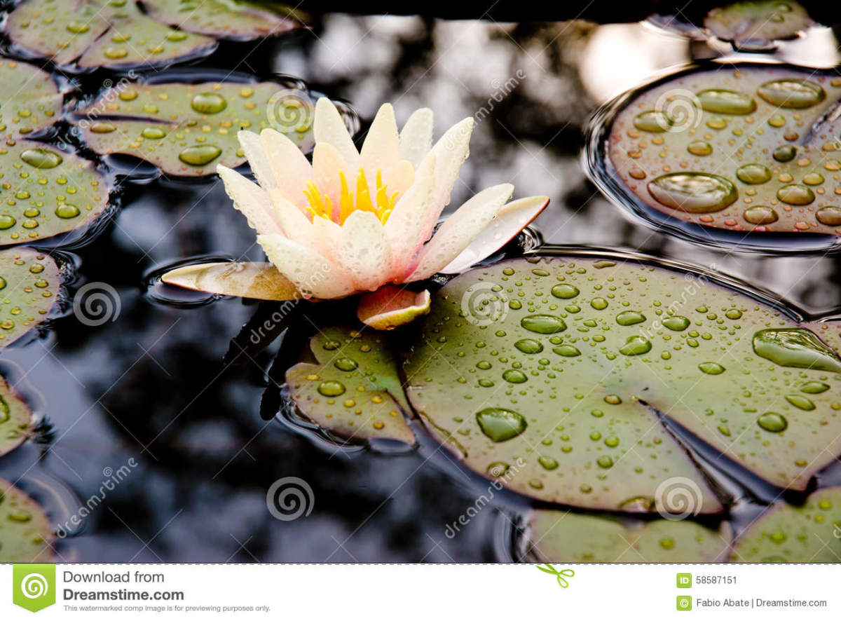 Raindrops From Heaven. Saturday's Inspiration 14. A Soulful Dedication to Rodric Anthony Johnson