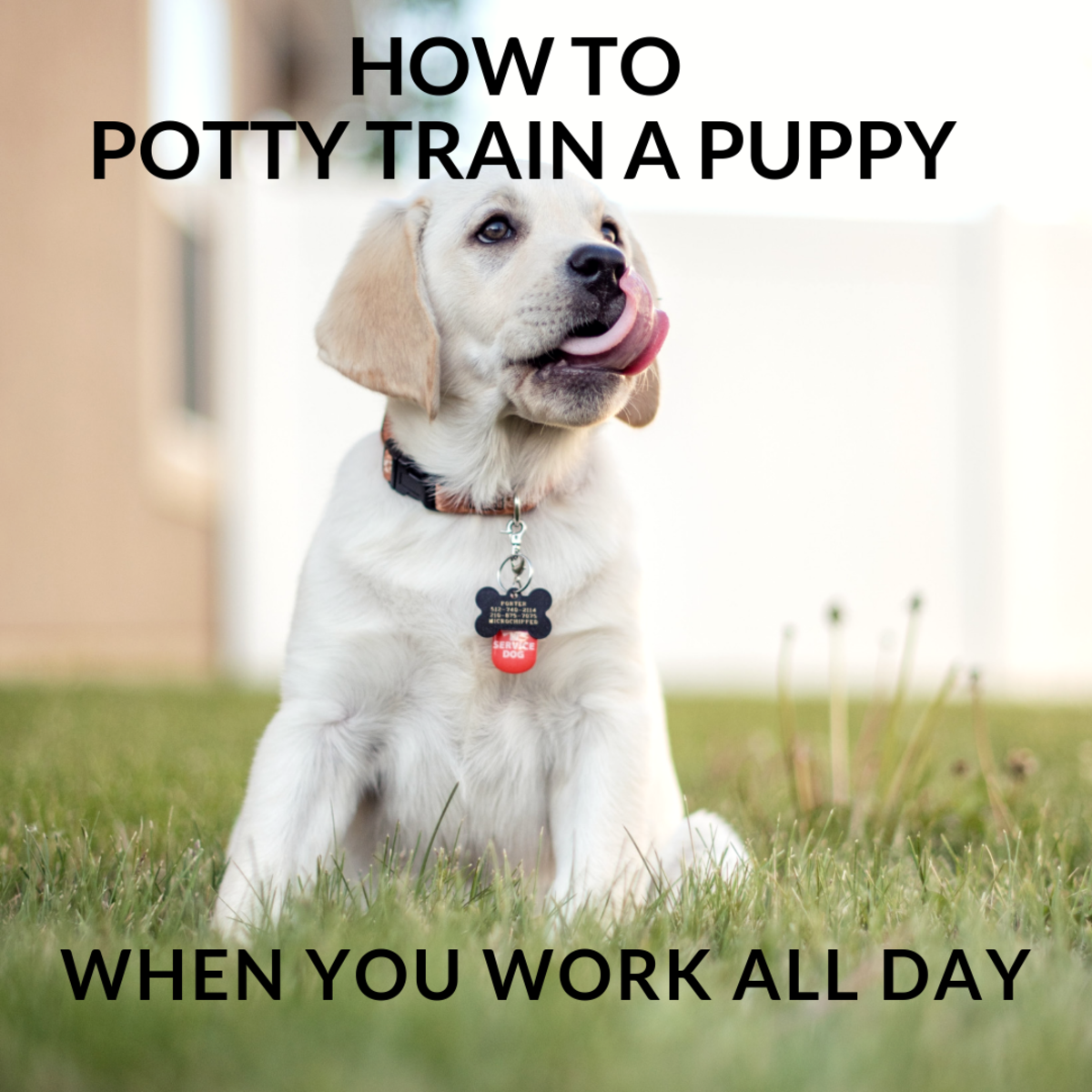 Potty training can be a challenge if you work all day.