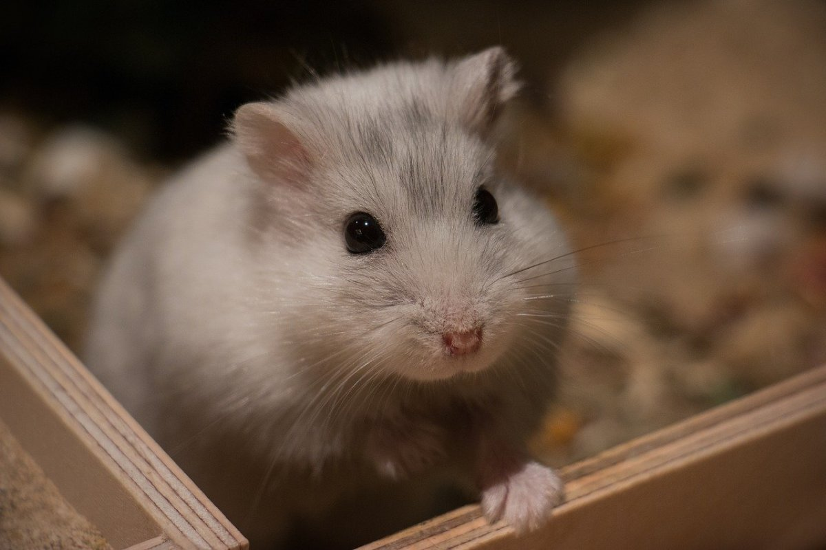 10 Things Your Hamster Needs For a Long and Happy Life