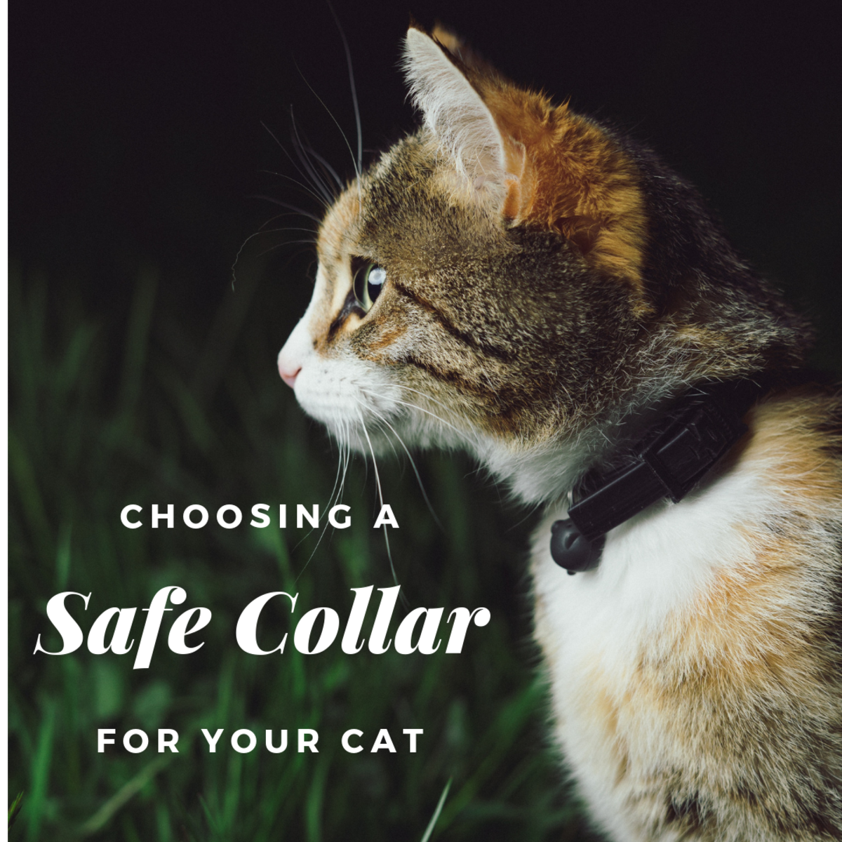 Safe Cat Collars: The Best Collar for Cats