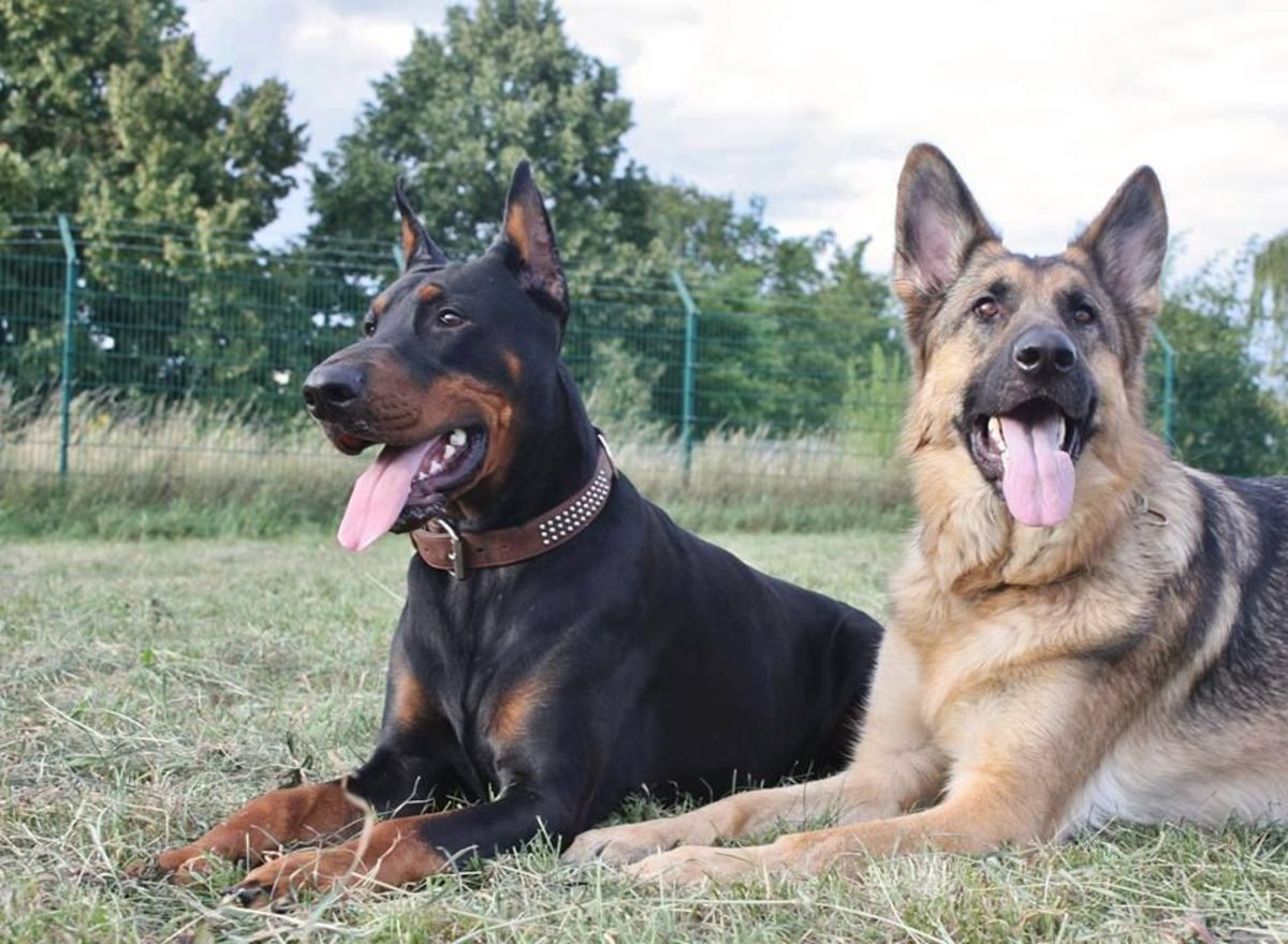 The Canine Team