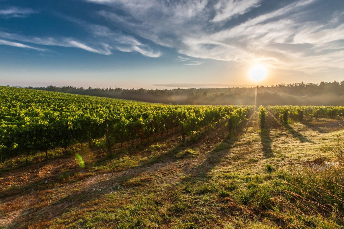 5 Beamsville Wineries to Visit If You Are Wine Tasting in Niagara