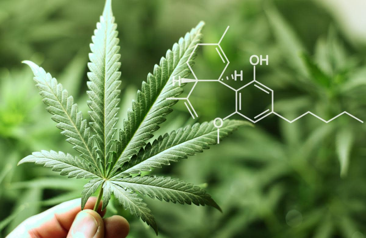 What Is CBD Oil and Why Is It the Next Big Thing?