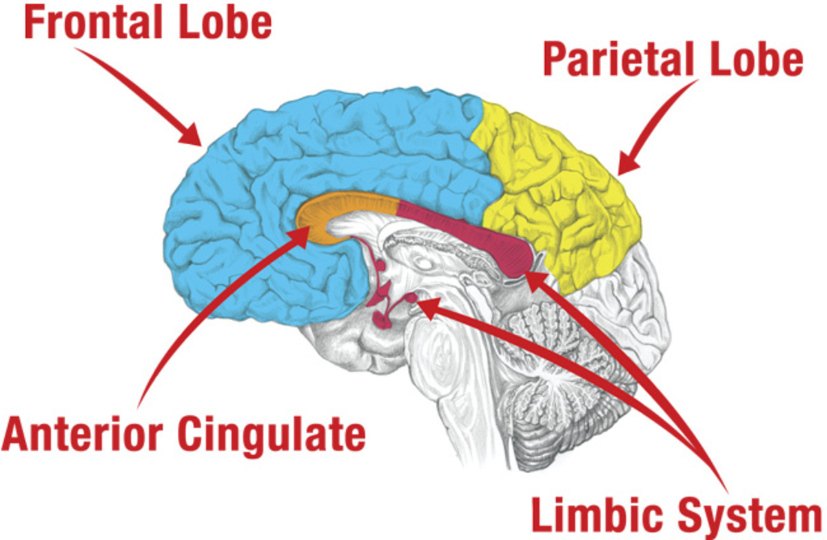 These areas of the brain are affected by prayer.