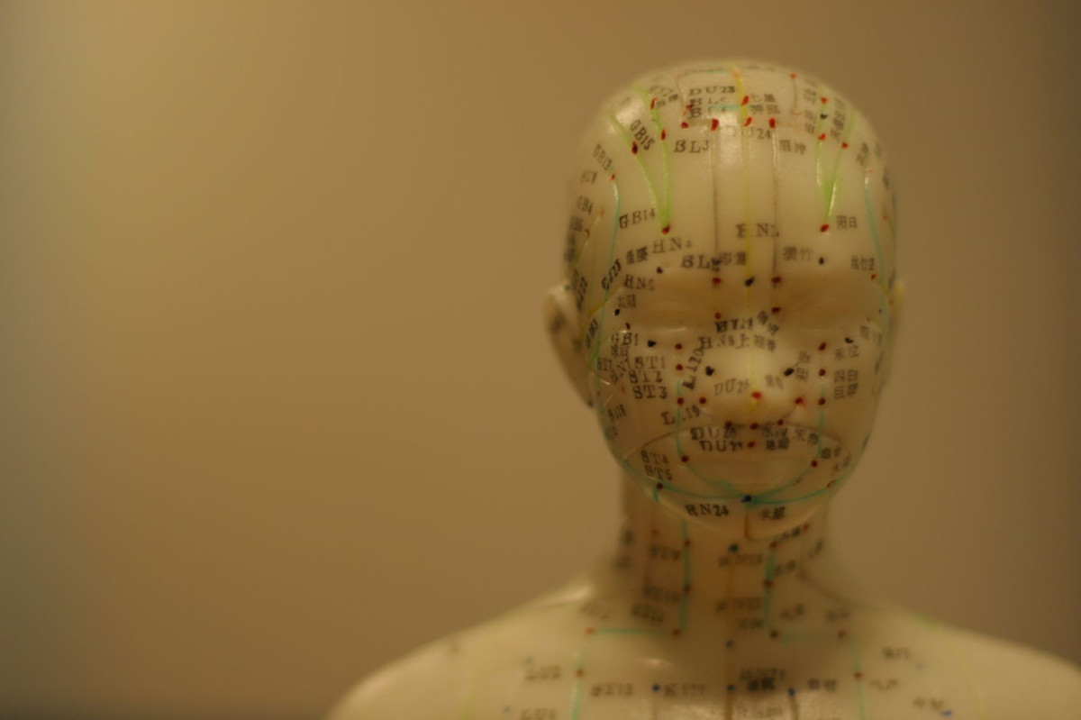 Model showing acupuncture points on the head and neck.