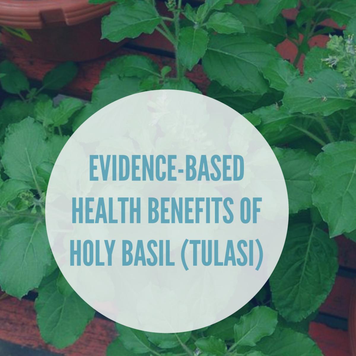 Evidence based benefits of holy basil or tulasi