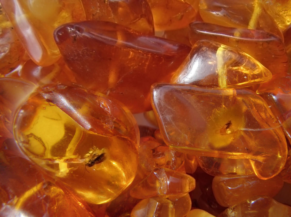 Amber is formed from tree resin that dripped from trees 50 million years ago. Oftentimes, you will also find fossilized insects trapped inside.