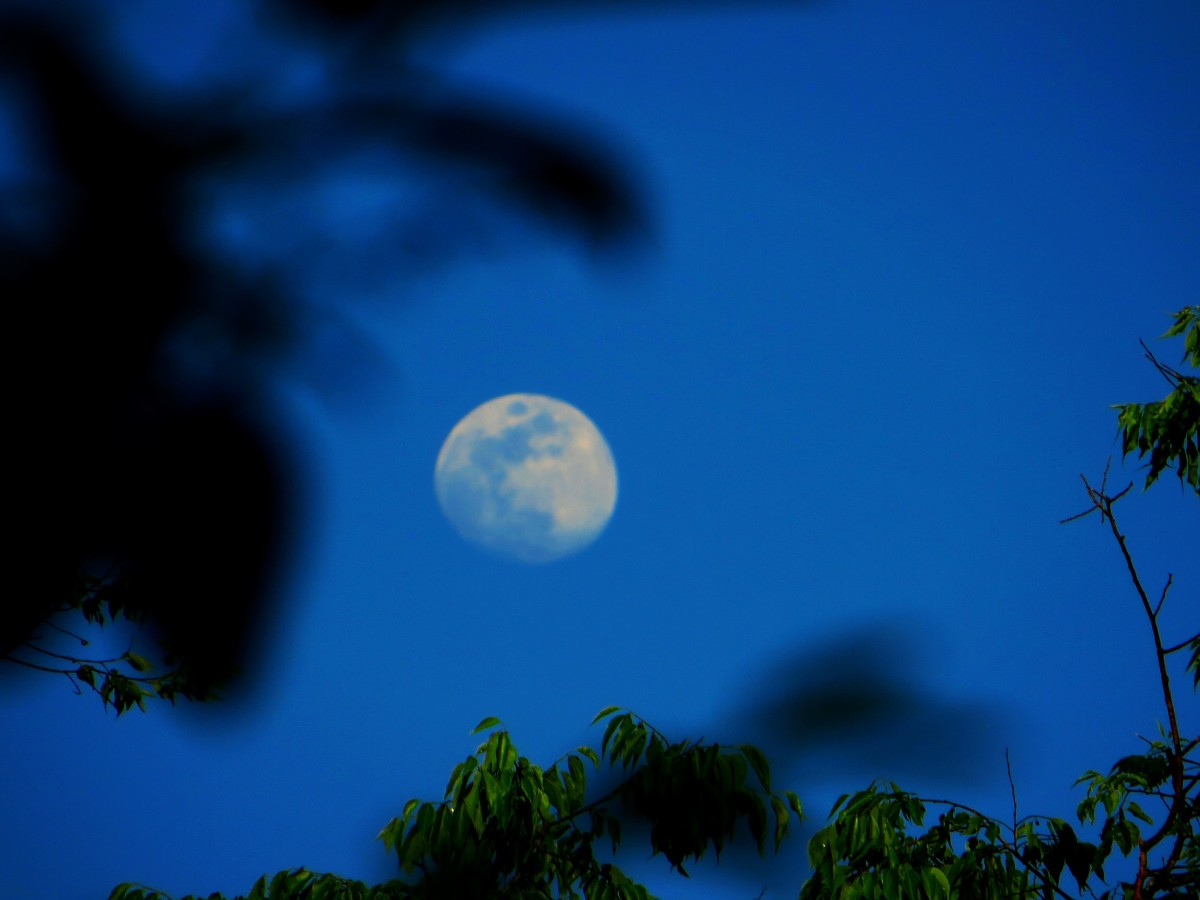 The Moon charges the Mystical properties of Mugwort.