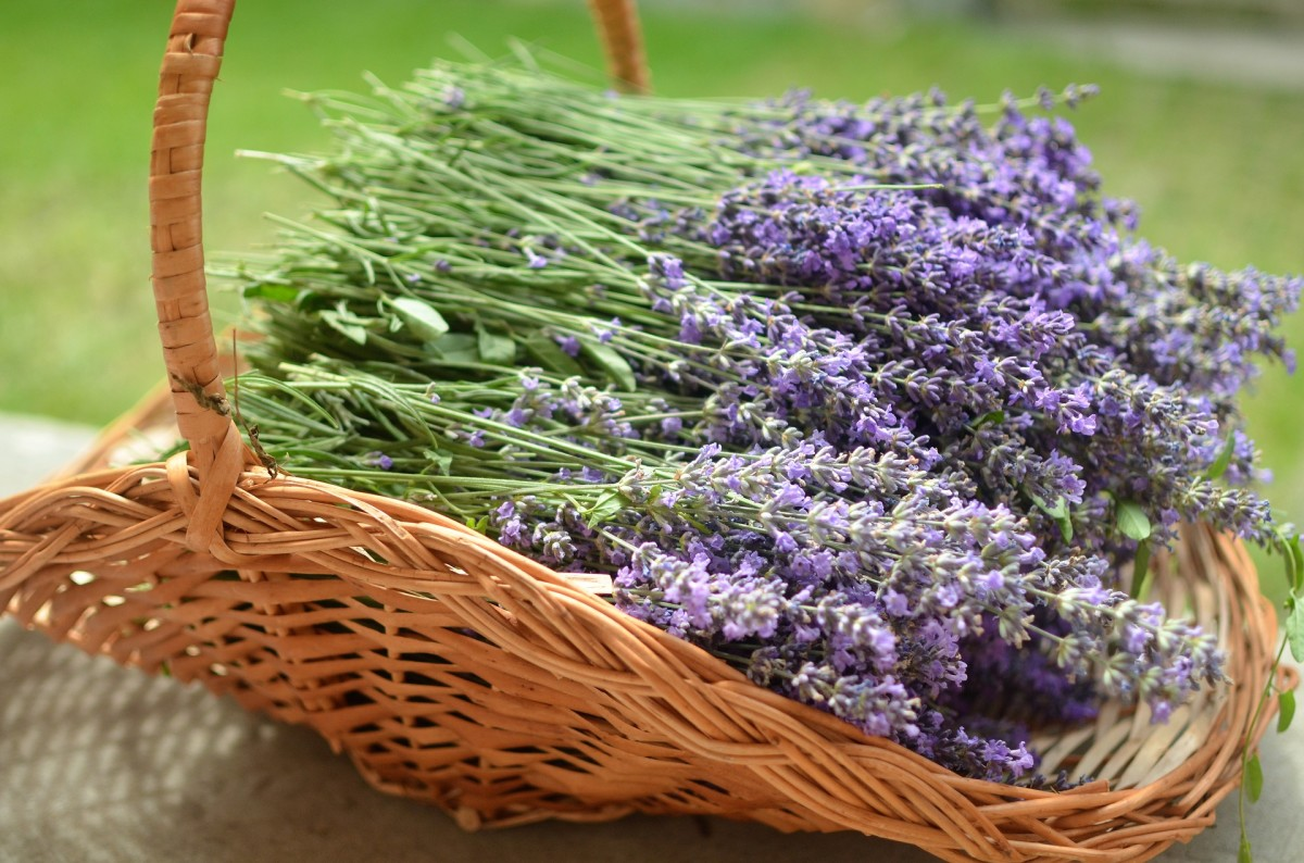 healing-properties-of-common-herbs