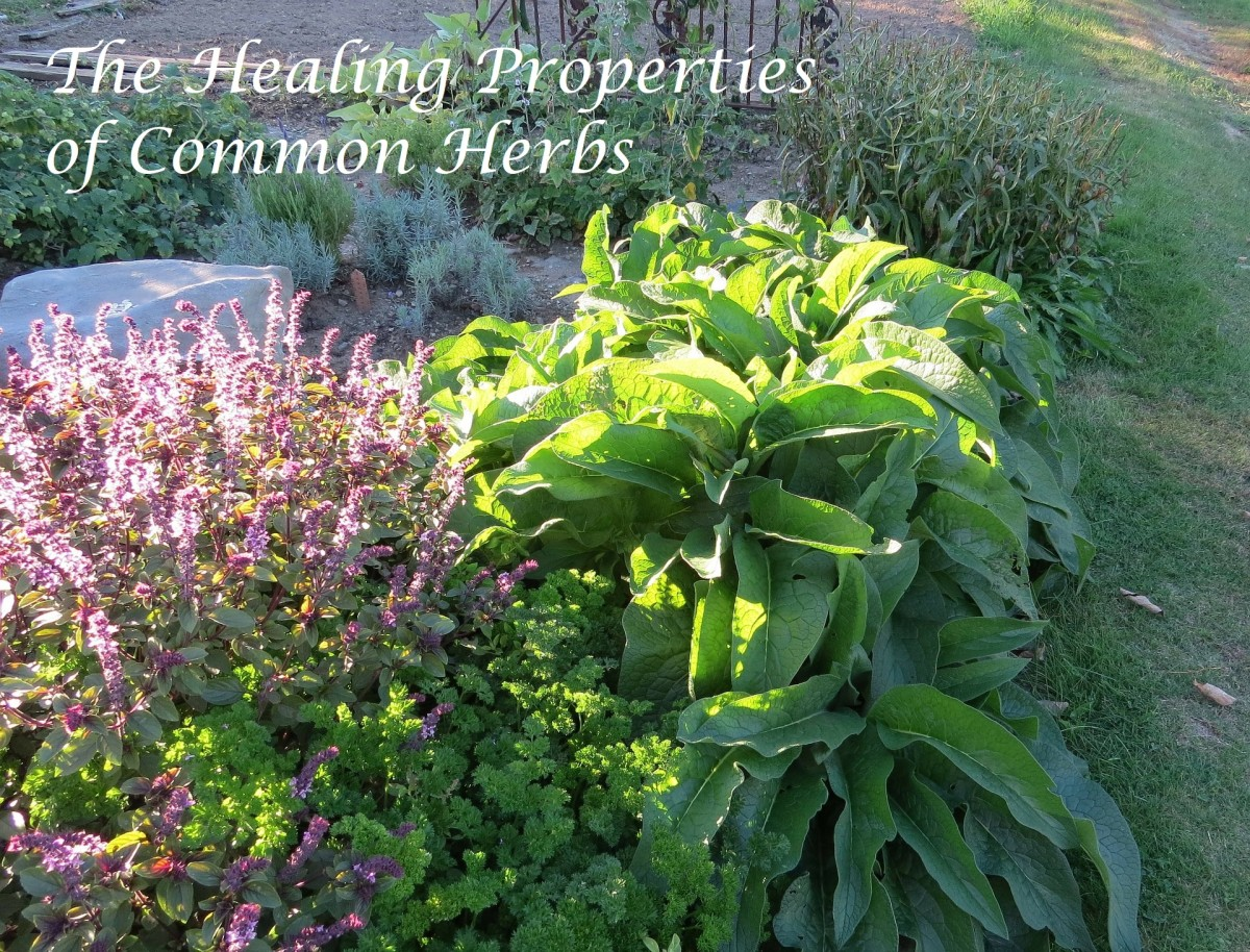 Healing Properties of Common Herbs