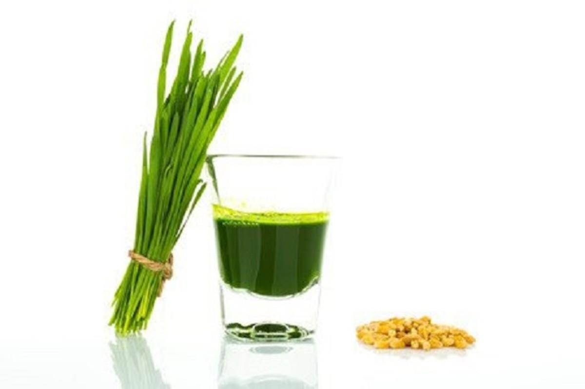 Wheatgrass, Wheatgrass Juice, and Powder
