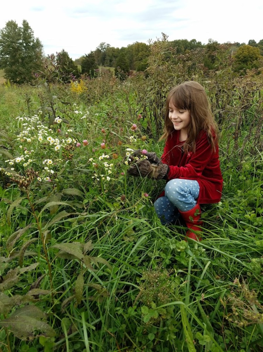 This is my daughter harvesting wild herbs to make her own medicine.
