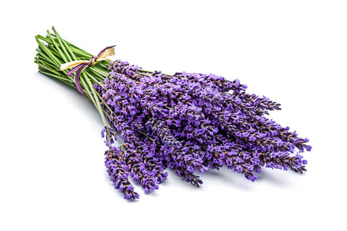 Lavender is commonly known as a fragrant purple flower that can be used in perfumes.