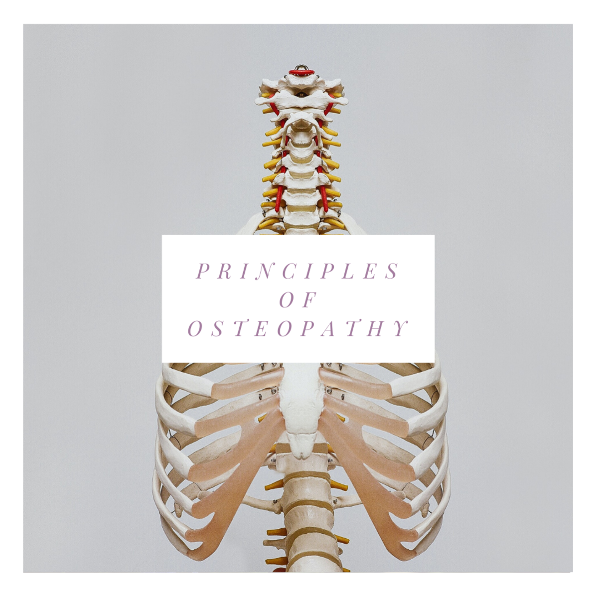 The Principles of Osteopathy