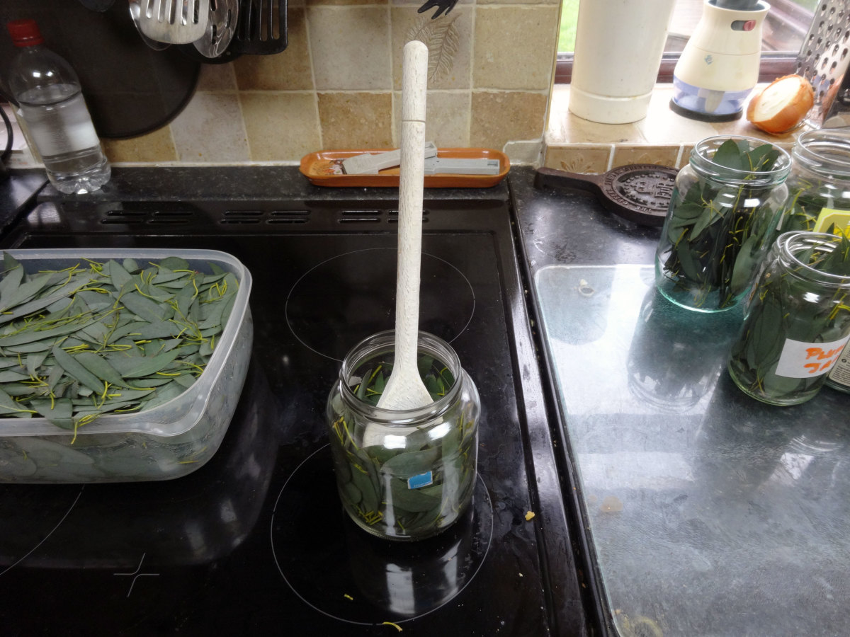 Pushing the eucalyptus leaves into the jam jars with a wooden spoon.