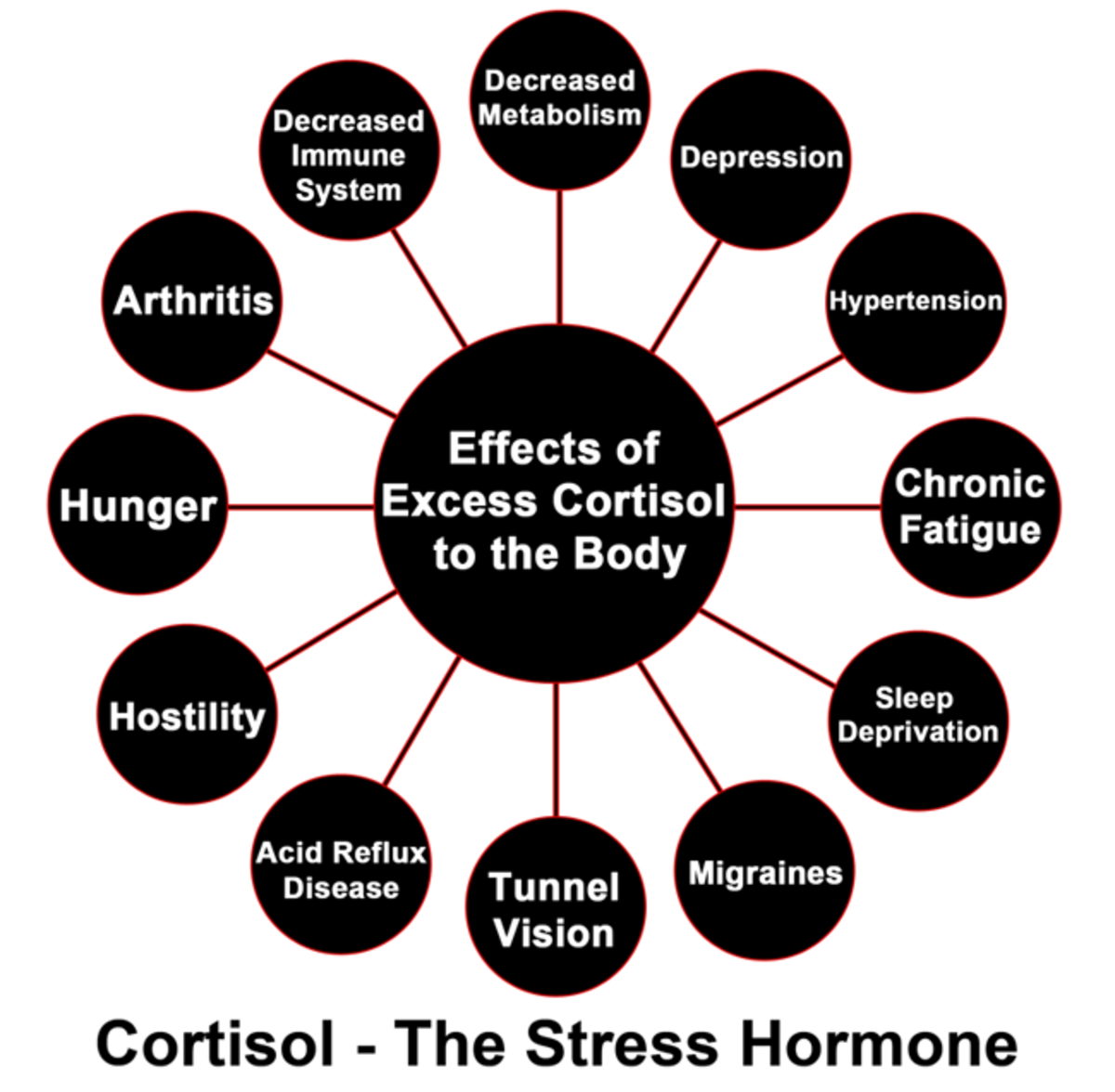 Effects of Cortisol on the Body