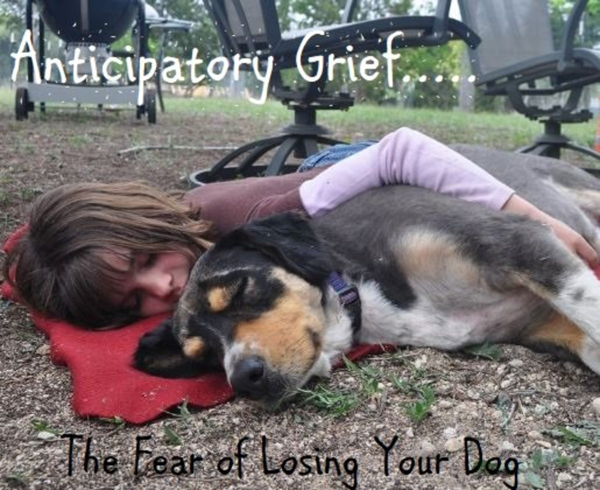Anticipatory Grief: Pre- Grieving the Loss of Your Dog