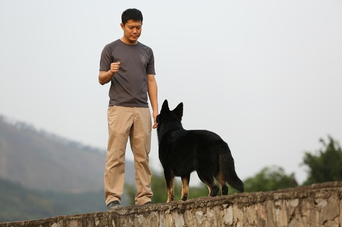How to Become a Dog Trainer: From Certification to Apprenticeship