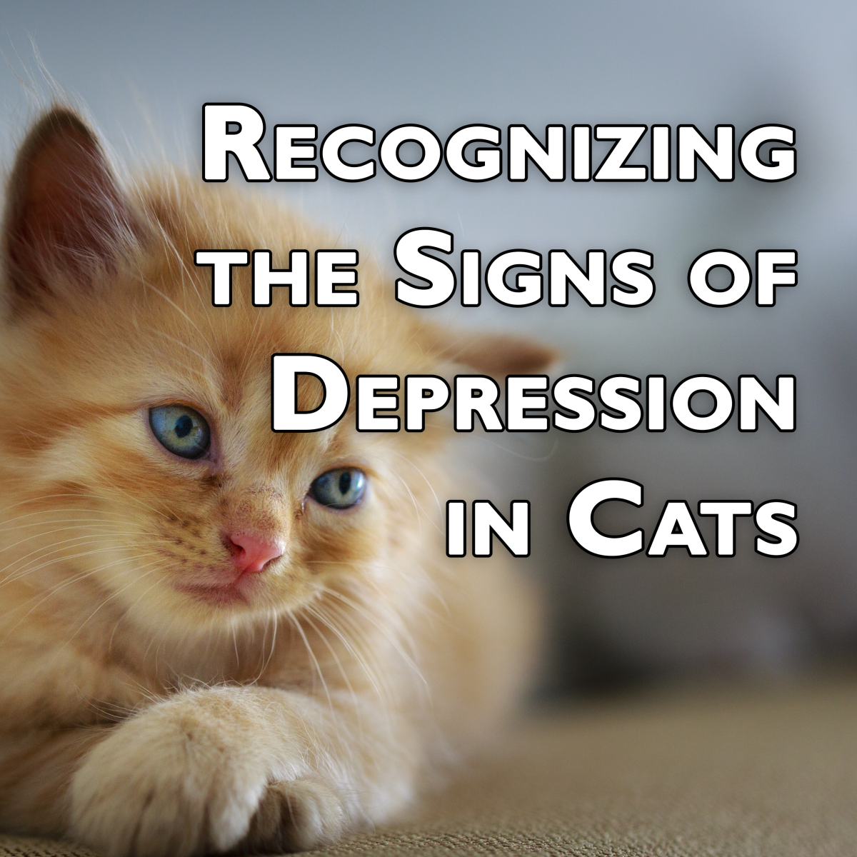 10 Signs and Symptoms of Depression in Cats
