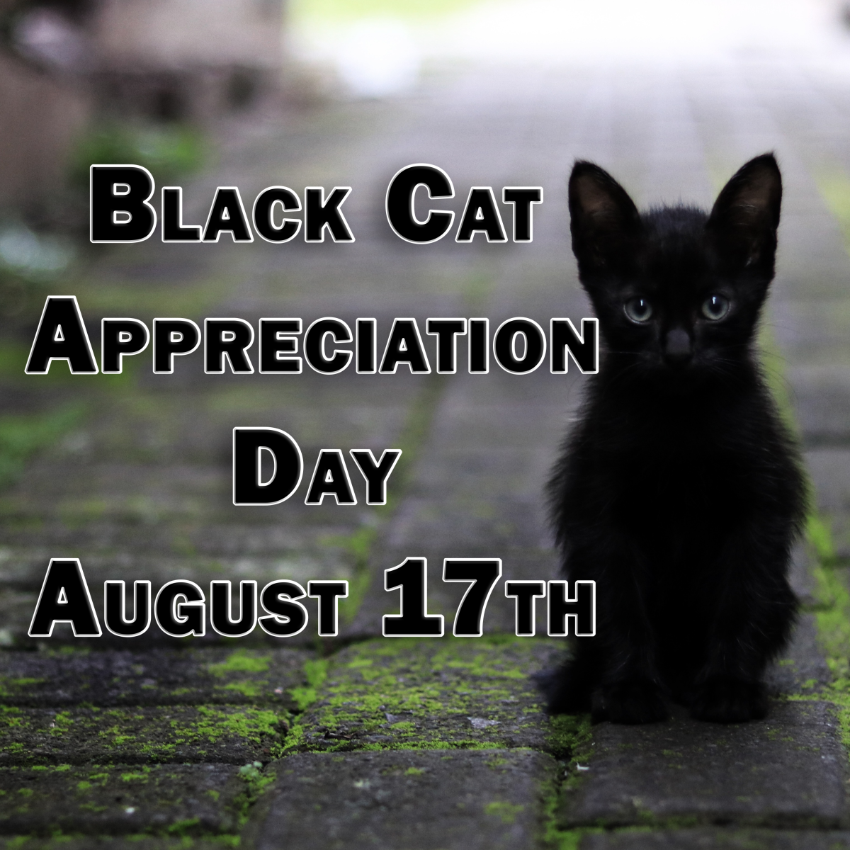 Black Cat Appreciation Day is celebrated on August 17th.