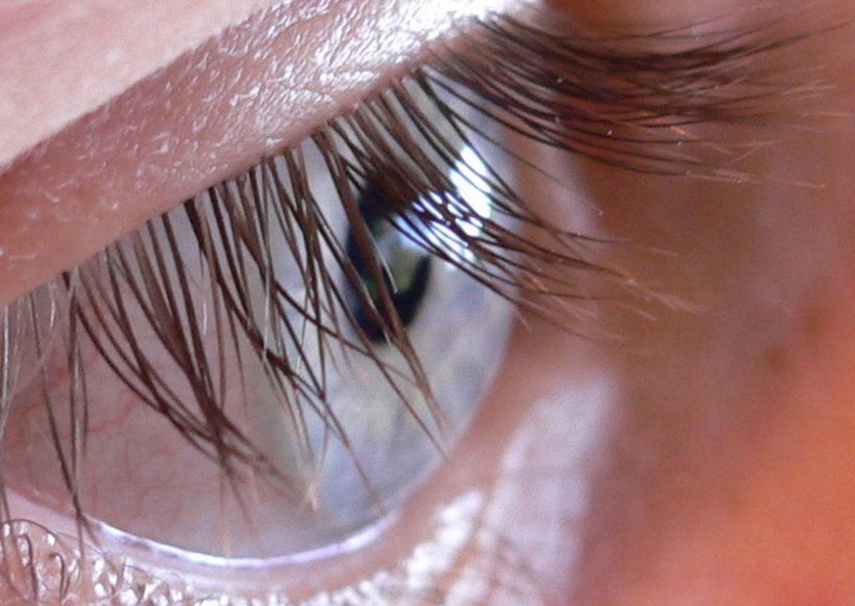 Human Eyelashes